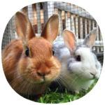 How to Take Care of a Pet Rabbit (Guide)