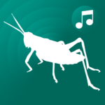 ringtones crickets for phone, cricket sounds free